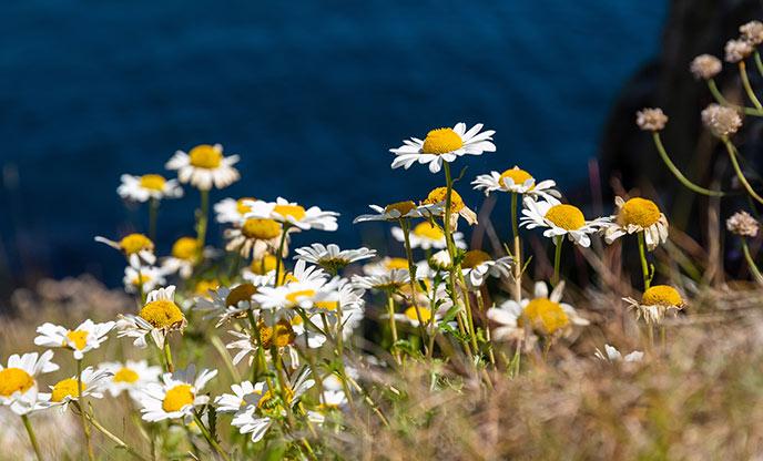 5 circular coastal walks, to enjoy in Cornwall this spring