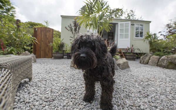 The best of dog friendly glamping holidays