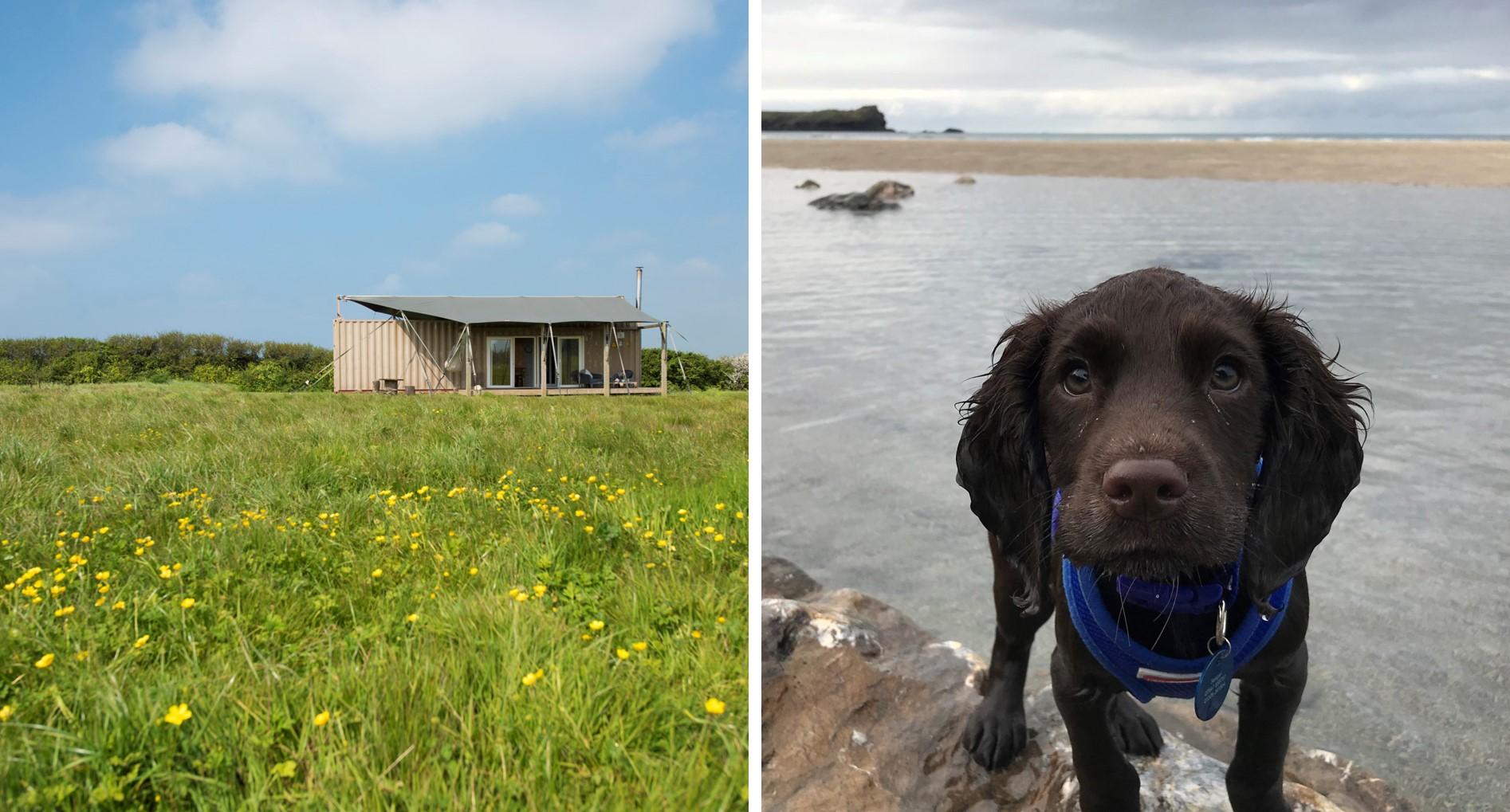 Rusty The Tin Tent - dog friendly cabin near the beach