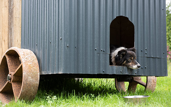 Dog Friendly glamping at Shepherd's Rest