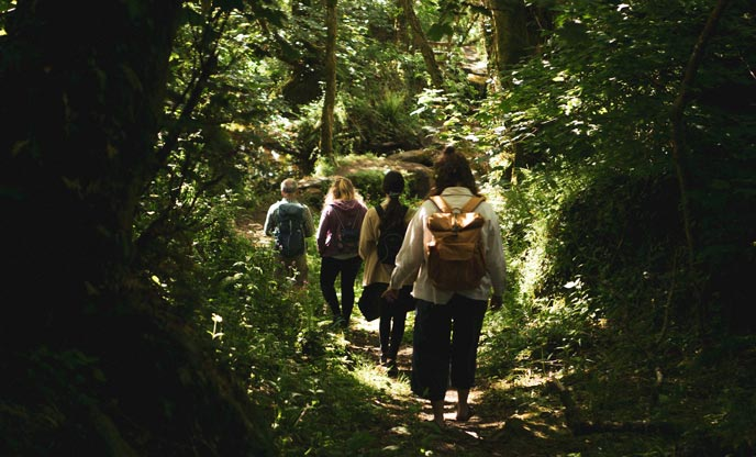 Forest bathing | The art of slowing down and feeling more